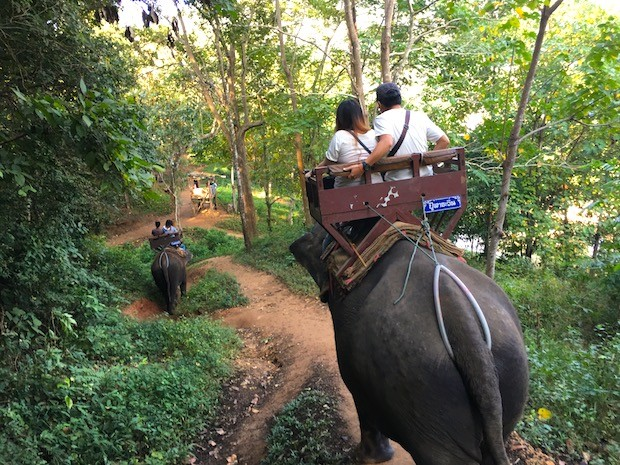 elephant riding chiang mai
